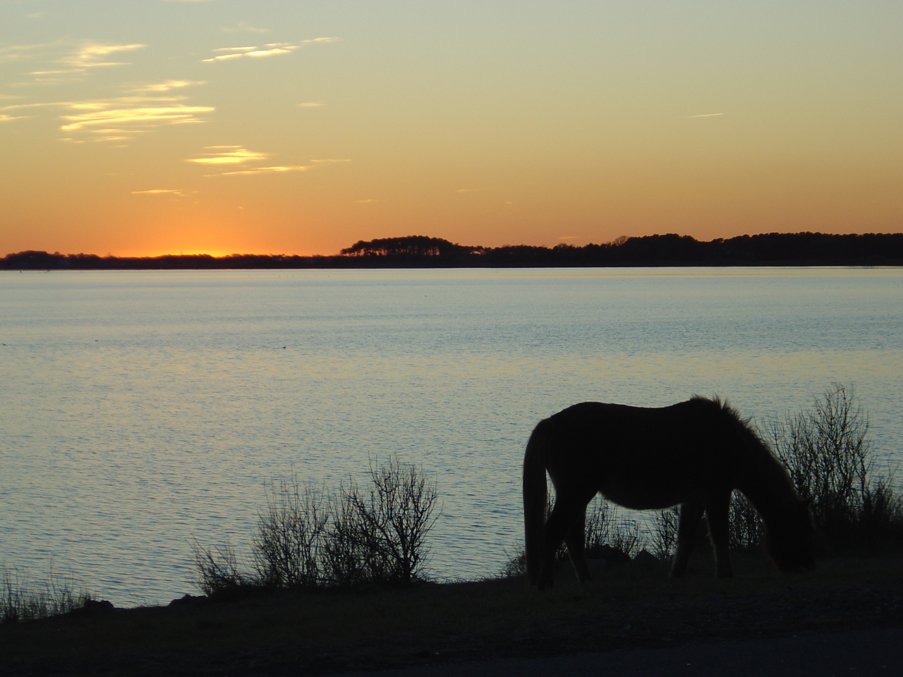 Assateague Island at sunset